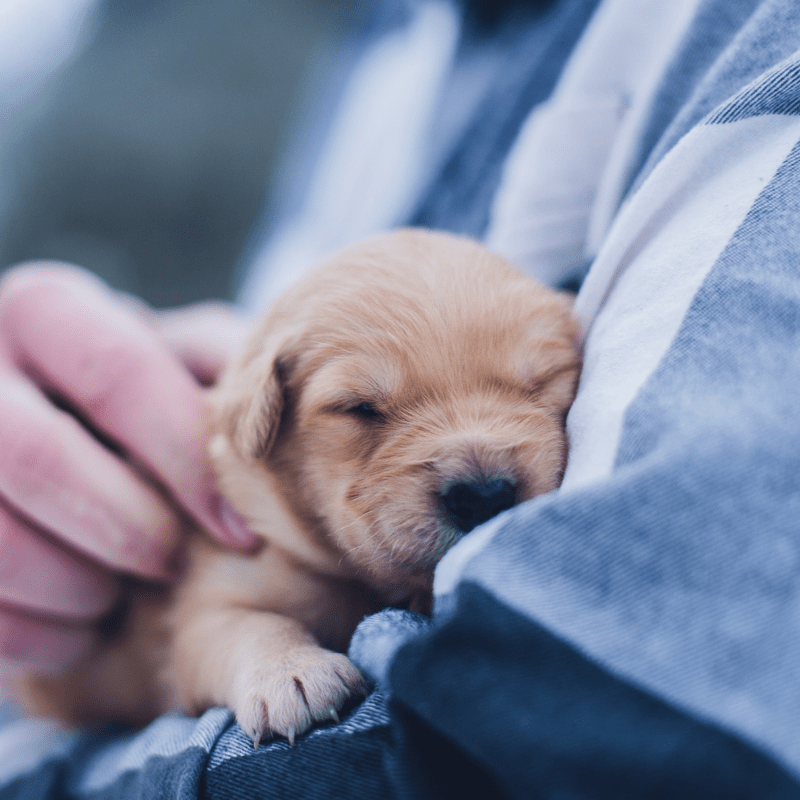 waarom een huisdierverzekering