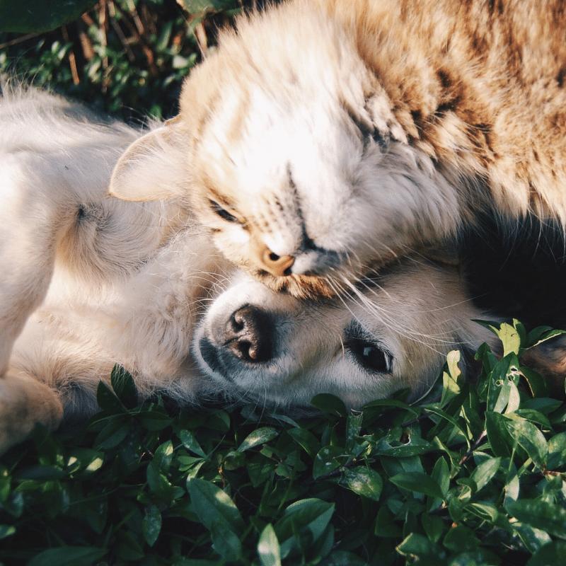 welke huisdieren verzekeren